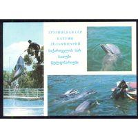 ДМПК СССР 1979 Батуми дельфинарий дельфины