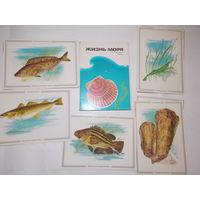 Набор открыток СССР, Жизнь моря Дальний восток
