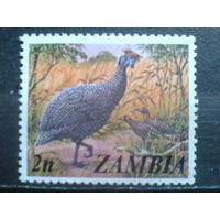 Замбия Птица**