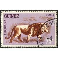 Кошки. Гвинея. 1962. Лев. Марка из серии. Гаш.