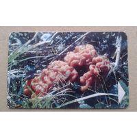 Телефонная карточка С редким грибом , старая не частая