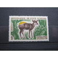 Марка - фауна, Кот д Ивуар