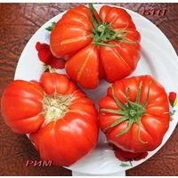 Семена томата Рим