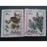 Польша 1995. Шишки. Полная серия