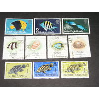 Брит. Виргинские острова, Брит. Гондурас, рыбы (2)