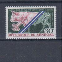 [324] Сенегал 1968.Фауна.Домашний скот.