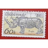 Чехословакия. Носорог. ( 1 марка ).