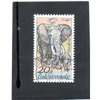 Чехословакия.Ми-2346. Африканский слон (Loxodonta africana). Серия: Чехословацкое сафари. 1976.