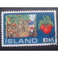 Исландия 1972 томаты