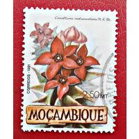 Мозамбик, 1981 г., флора, цветы