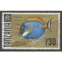 Танзания. Рыбы. Хирург белогрудый. 1967г. Mi#29.