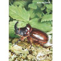 Беларусь  2001 Жук - насарог. Жук-носорог  Тираж  3000