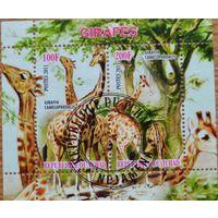 Жирафы, блок, Чад
