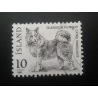 Исландия 1980 собака