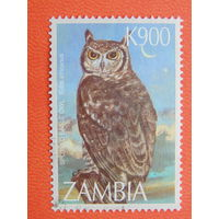 Замбия.  Птицы.