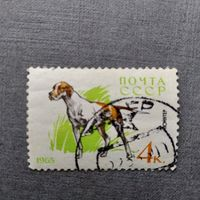 Марка СССР 1965 год. Служебные и охотничьи собаки