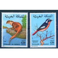 Марокко 1979 фауна птица выдра серия 2м MNH