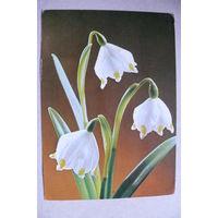 Цветы; 1971, подписана (ГДР).