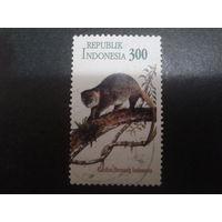 Индонезия 1996 фауна, совм. выпуск с Австралией