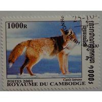 Камбоджа.2001.лиса