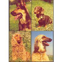 Фауна собаки ф4