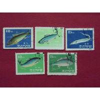 Корея 1962г. Рыбы.