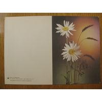Киндрова. 8 Марта. Цветы, ромашки. 1988. Двойная, не согнутая, чистая.