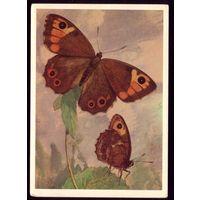 1981 год Л.Аристов <u>открытки</u> Бабочки
