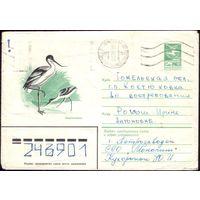 1983 год ХМК Шилоклювка 83-166