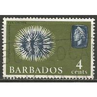 Барбадос. Королева Елизавета II. Морской ёж. 1965г. Mi#238.
