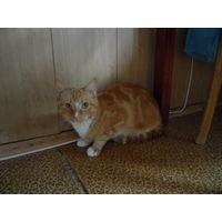 Кот, красивый рыжий-полосатый ищет старых или новых хозяев