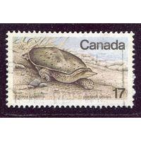 Канада. Черепаха. Колючий трионикс