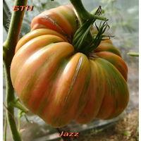 Семена томата Jazz / Джаз