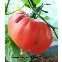Семена томата Большая паста Кэрол Чико (Carol Chykо S Big Paste)