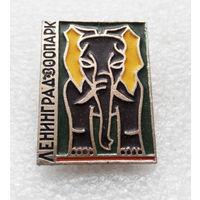 Ленинград. Зоопарк. Слон. Животные #0156-UP6
