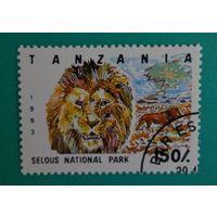 Танзания.1993.наиональный парк,лев.