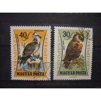 Марки.Венгрия,фауна,птицы.1962