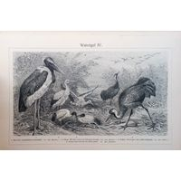 Watvogel 3. 4.  Германия конец 19 века.