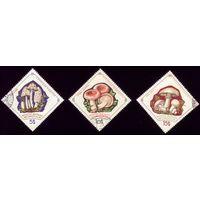 3 марки 1964 год Монголия Грибы 345-347