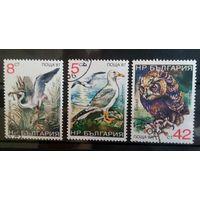 Болгария птицы-1987-3 марочки
