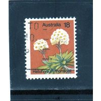 Австралия.Ми-591. Helichrysum Thomsonii. Серия: Растения. 1975.