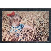 Раскин Б. Пшеница золотая. Дети 1972 г. Чистая.