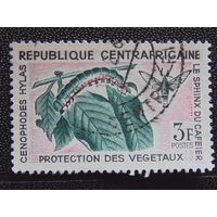 Центральноафриканская Республика. Насекомые.