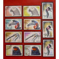 Гвинея. Фауна. ( 11 марок ) 1962 года.