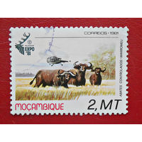 Мозамбик, 1981г., фауна, буйволы