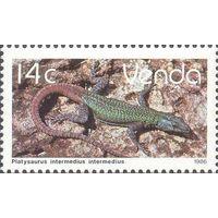 Фауна Южная Африка Venda