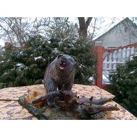 Статуэтка деревянная старинная Медведь