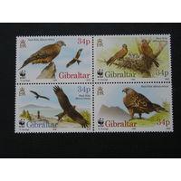 Гибралтар 1996 Птицы (4)