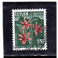 Цейлон.Ми-270. Phaius tankervilleae - Звездная орхидея. 1952.