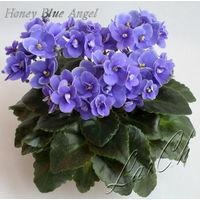 Фиалка Honey Blue Angel (св.лист) мини